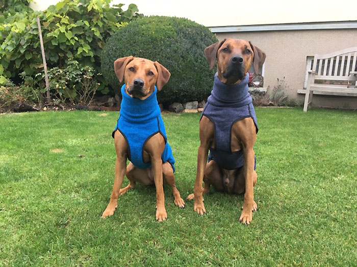 Ridgeback-in-jumper